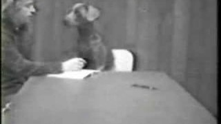 William Wegman Short Films